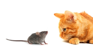 Fearful Mouse